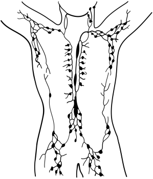 Lymphatic_system_(vector).svg